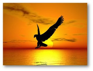 Aguila_libre